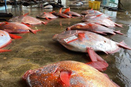勝浦魚市場